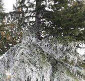 Çorum'da ağaçlar bile dondu