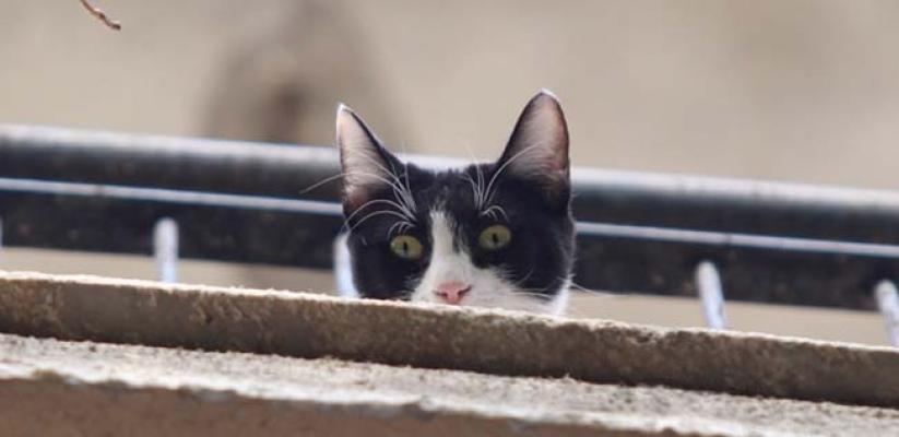 Kedi itfaiyeciyi hastanelik etti