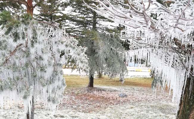 Ağaçlar bile dondu