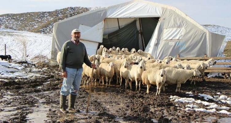 Çadırlar çöktü, hayvanlar dışarda kaldı