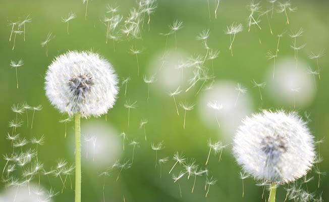 Meteoroloji alerji tahmini de yapacak