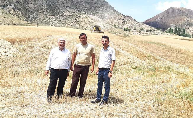 Arpadan sonra buğday hasadı