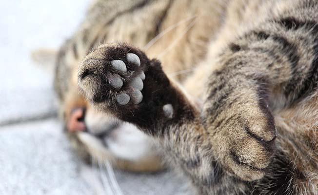 Kedi hastanelik etti