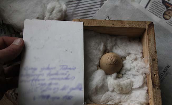 Bu yumurta 40 yıldır saklanıyor