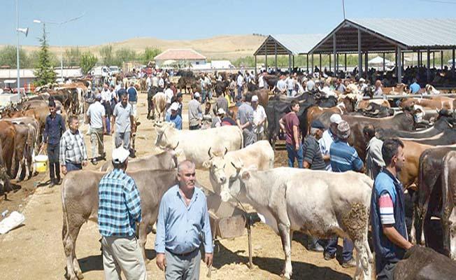Çorum'daki bütün hayvan pazarları kapatıldı