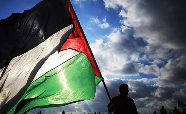 Filistin'de zeytin fidanlığı