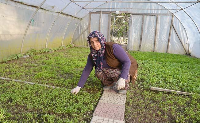Evinin bahçesinde 100 bin fide üretiyor