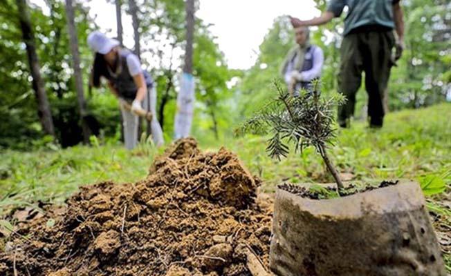 Sağlık kahramanları için 81 ilde orman