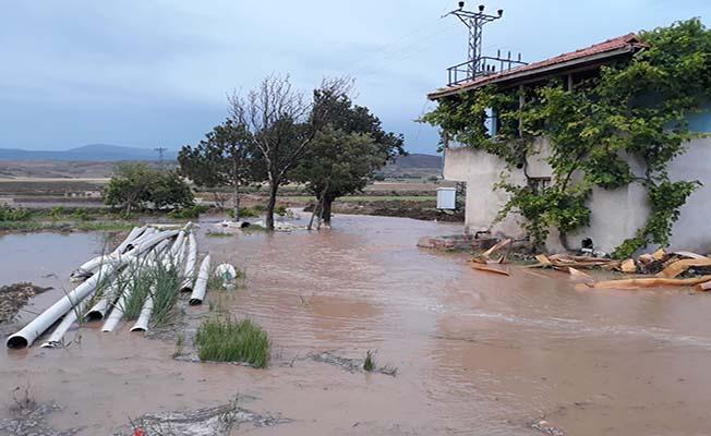 Sağanak yağış çeltik tarlalarını vurdu