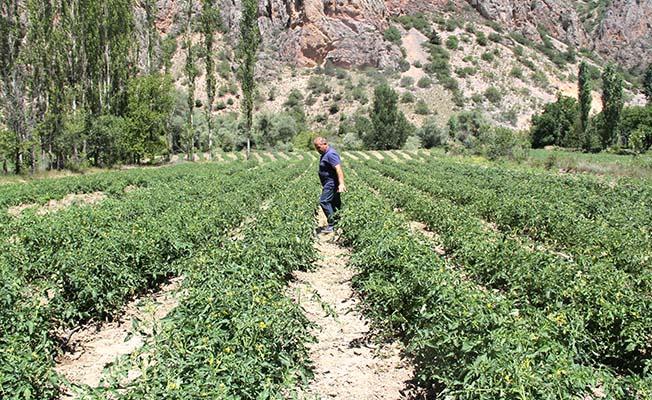 Girişimciler atıl tarım arazilerini değerlendirdi