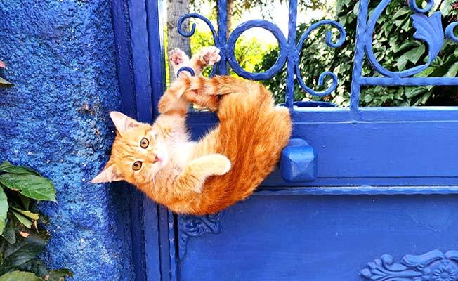 Yaramaz kedi böyle mahsur kaldı