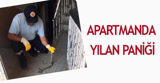Apartmanda yılan paniği