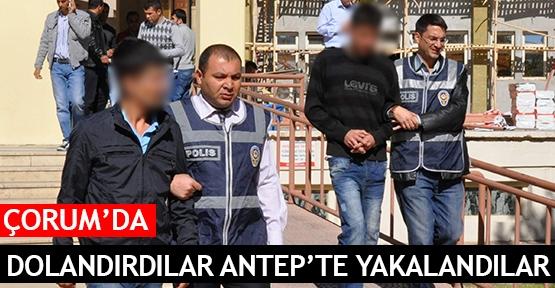 Çorum'da dolandırdılar Antep'te yakalandılar