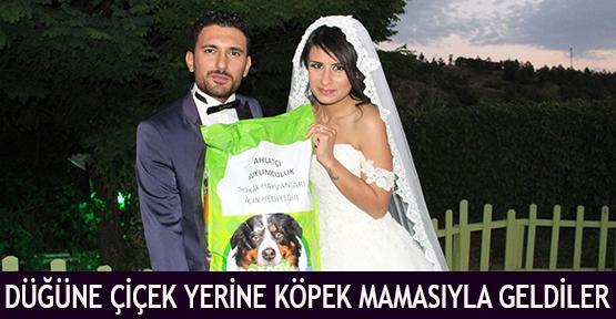 Düğüne çiçek yerine köpek mamasıyla geldiler