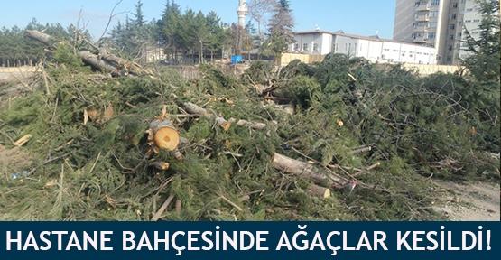 Hastane bahçesinde ağaçlar kesildi!