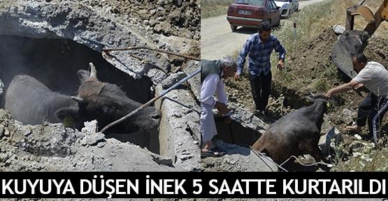 Kuyuya düşen inek 5 saatte kurtarıldı