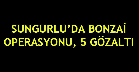 Sungurlu'da bonzai operasyonu, 5 gözaltı
