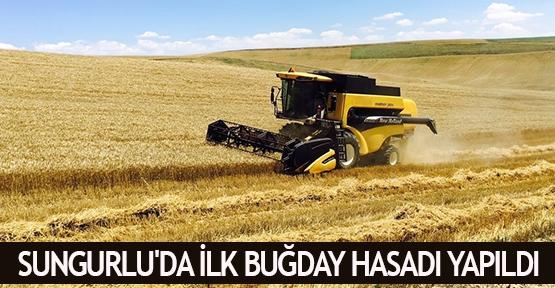 Sungurlu'da ilk buğday hasadı yapıldı