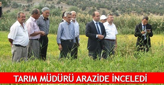 Tarım Müdürü arazide inceledi