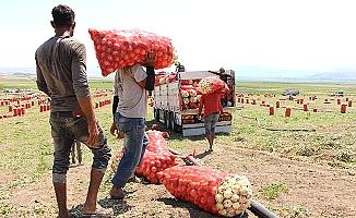 Soğan üreticisi ne diyor?