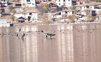 Türkiye'nin yeni kuş cenneti