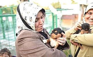 Sokak hayvanlarına kadın şefkati