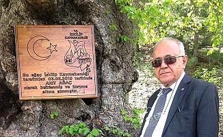 Anıt ağaçlar koruma altında
