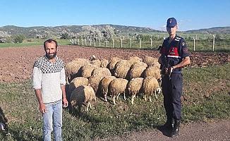 Kayıp koyunlar jandarma buldu