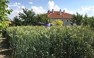 7 bin yıllık tohum dağıtıldı