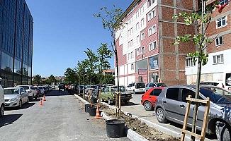 Yeni açılan yol ağaçlandırılıyor