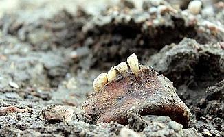 Parçalanmış kafatası bulundu