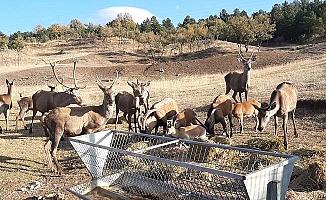 Yabani hayvanlar Belediye'ye emanet
