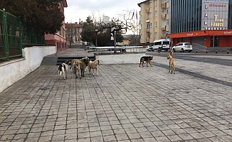 Sokak hayvanları için barınak talebi