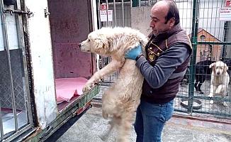 Tedavi için Ankara'ya naklettiler
