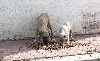 Sokak hayvanlarına mama