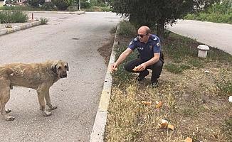 Polisler elleriyle besledi