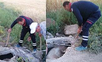 3 metrelik kuyuya düşen ineği itfaiye kurtardı