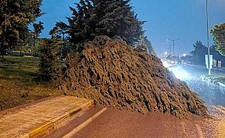 Ağaçlar devrildi, itfaiyeye ihbar yağdı