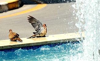 Belediye'ye süs havuzu eleştirisi