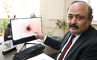 Bir çarpıcı kene haberi de Sivas'tan geldi