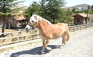 Atlara hemşehrimiz sahip çıktı