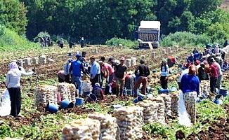 Tarım işçileri için 13 ile 15 milyon ödenek