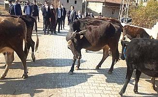 3 ilçeye hayvancılık desteği