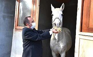 İskilip'e Arap Atı hediye edildi