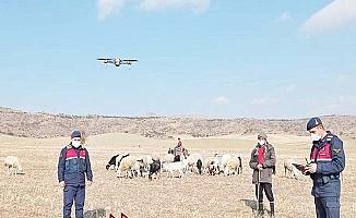 Kayıp hayvanlar drone ile bulundu