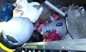 Çöp konteynerinde mahsur kaldı