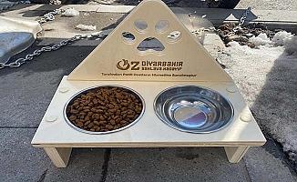 Öz Diyarbakır sokak hayvanlarını unutmadı