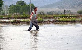 Pirincin başkenti 20 bin ton çeltik üretti