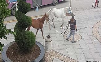 Atlar caddeye indi