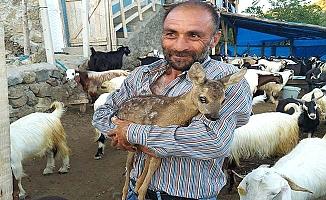 Çoban buldu, koruma altında